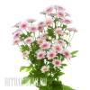 Хризантема в ассортименте купить на похороны