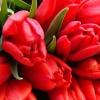 Траурная корзина с красными Тюльпанами